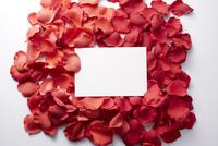 フェイクの花びらの上の白い紙
