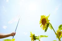 ヒマワリ畑で虫取りあみを持つ女性