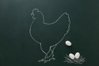 黒板に白いチョークで描いた鶏と卵 10179009584| 写真素材・ストックフォト・画像・イラスト素材|アマナイメージズ