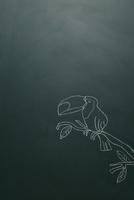 黒板に白チョークで描いたオニオオハシ