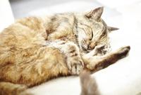 気持ち良さそうに眠る猫