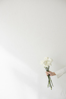 壁前で白いカーネーションを持つ女性の手 10179010767| 写真素材・ストックフォト・画像・イラスト素材|アマナイメージズ