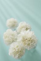 5本の白いカーネーションと光 10179010901| 写真素材・ストックフォト・画像・イラスト素材|アマナイメージズ