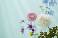 色とりどりの花々と光 10179010903| 写真素材・ストックフォト・画像・イラスト素材|アマナイメージズ