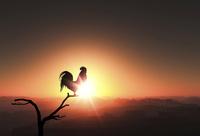 日の出を見るニワトリ