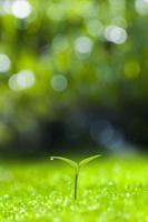 森の中の双葉 10185002342  写真素材・ストックフォト・画像・イラスト素材 アマナイメージズ