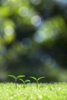 森の中の双葉 10185002358  写真素材・ストックフォト・画像・イラスト素材 アマナイメージズ