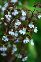 林間に咲くエビネの花
