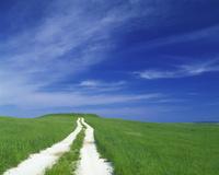 青空と牧草地にある一本道