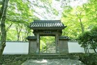 大威徳寺 山門 10194005455| 写真素材・ストックフォト・画像・イラスト素材|アマナイメージズ