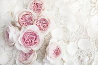白いレースの上のピンクのバラの花