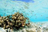 珊瑚と小魚