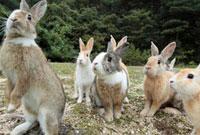 餌に集まるウサギ 10210000273| 写真素材・ストックフォト・画像・イラスト素材|アマナイメージズ