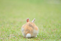 ウサギの背中 10210000276| 写真素材・ストックフォト・画像・イラスト素材|アマナイメージズ