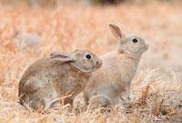 ウサギのポートレート 10210000297| 写真素材・ストックフォト・画像・イラスト素材|アマナイメージズ