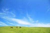 草を食む馬 10210000339  写真素材・ストックフォト・画像・イラスト素材 アマナイメージズ