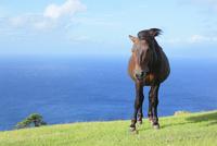 風に吹かれ立つ馬