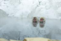 仲良しが寄り添って温泉に入るニホンザル