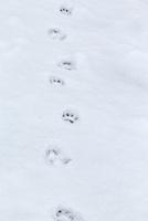 ニホンザルの足跡 10210000479| 写真素材・ストックフォト・画像・イラスト素材|アマナイメージズ
