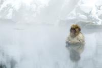 温泉に入る、もうすぐ1歳になる子ザル 10210000501| 写真素材・ストックフォト・画像・イラスト素材|アマナイメージズ