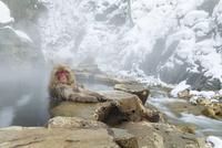 眠りながら温泉に入るニホンザル