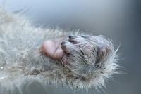 子ザルの手 10210000518| 写真素材・ストックフォト・画像・イラスト素材|アマナイメージズ