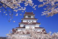 桜と鶴ヶ城 10211006286| 写真素材・ストックフォト・画像・イラスト素材|アマナイメージズ