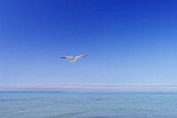 青空と海と一羽のカモメ 10217000238| 写真素材・ストックフォト・画像・イラスト素材|アマナイメージズ