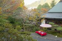 大原冬桜咲く芹生の庭