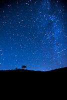 霧ヶ峰高原一本の木と北方面の夏の星空