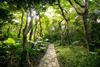 斎場御嶽参道と森林 10222008447| 写真素材・ストックフォト・画像・イラスト素材|アマナイメージズ
