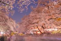 上野公園夜桜 10222008758| 写真素材・ストックフォト・画像・イラスト素材|アマナイメージズ