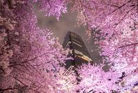 東京ミッドタウン,ライトアップの桜並木