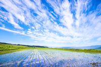 空の表情映す田植えの済んだ水田