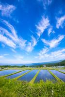 水田と空の表情