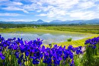 アヤメ咲く田園と八ヶ岳連峰に空の表情