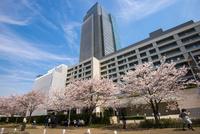 サクラ満開の東京ミッドタウン 10222012602| 写真素材・ストックフォト・画像・イラスト素材|アマナイメージズ
