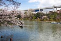 桜咲く千葉公園 綿打池とモノレール 10222012661| 写真素材・ストックフォト・画像・イラスト素材|アマナイメージズ