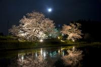 夜桜と月 10222012829| 写真素材・ストックフォト・画像・イラスト素材|アマナイメージズ