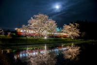 夜汽車と水田に映る桜と月  10222012963| 写真素材・ストックフォト・画像・イラスト素材|アマナイメージズ
