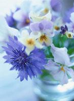 セグルマギクとビオラの花
