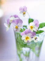 紫色のビオラのフラワーアレンジメント