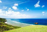 海辺に立つ1頭の馬