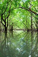 水面に映るマンブローブ林 10241000194| 写真素材・ストックフォト・画像・イラスト素材|アマナイメージズ