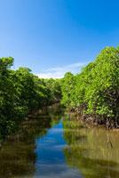 青空とマングローブ林