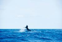 鯨の尾びれ
