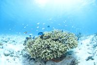 青い海、白い砂浜、サンゴと小魚の群れ