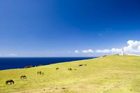 青空と青い海と東崎の与那国馬