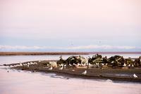 クジラの死骸とシロクマ 10241001709| 写真素材・ストックフォト・画像・イラスト素材|アマナイメージズ