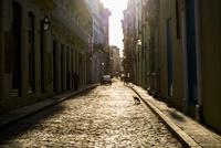 キューバ ハバナ市街の犬